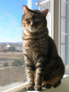 Eliza the cat