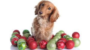 dog and xmas balls