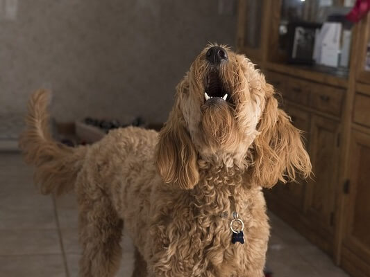 Tips to Stop or Reduce Excessive Barking