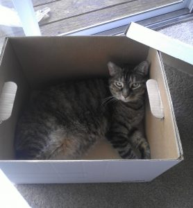 Eliza the cat in a box
